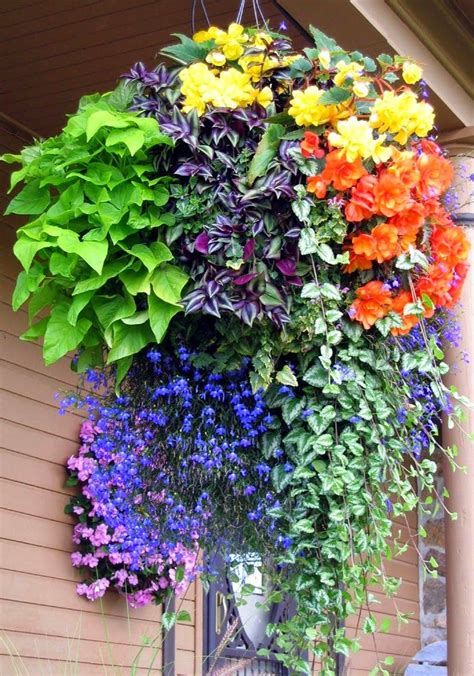Hanging Flower Garden 1000 Ideas About Hanging Baskets On Hanging Ferns Hanging Gardens And Hanging