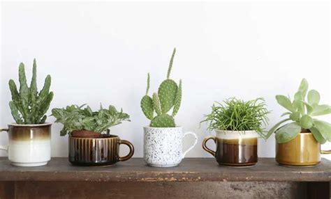 piante grasse in casa piante grasse in casa cura delle piante grasse in casa