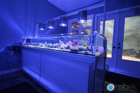 saltwater aquarium led lighting 1000 images about aquarium on pinterest