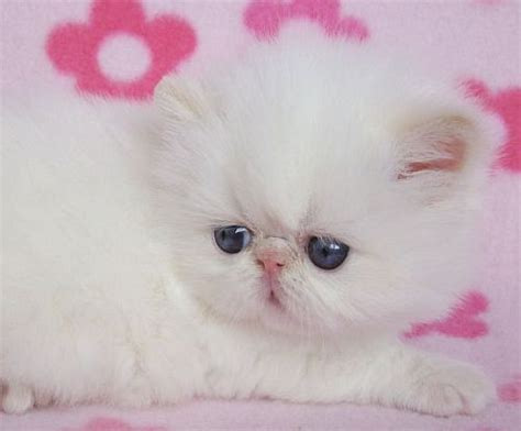 lume url pics pisici albe upload photos for url