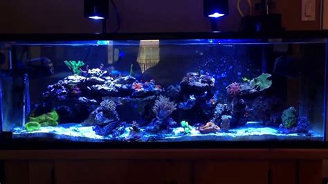 led lights for saltwater tank 60 gallon saltwater reef tank with kessil a350w lights