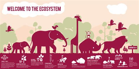 libro infographics animal kingdom infographic fantastic the loft