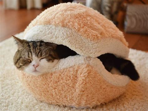 cat burger bed disturb the cat hamburger and prepare to be scratched
