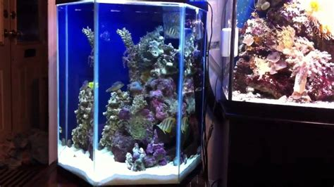 Saltwater Aquascaping 72 Bow And 29 Hexagon Saltwater Aquarium Youtube