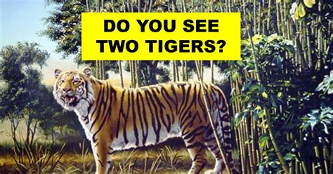 When Do You Buy by There Are Two Tigers In This Picture Can You Spot The