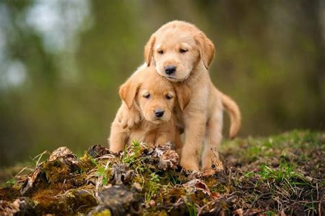 Eva Vase Cute Lovable Puppy Playing With His Bro