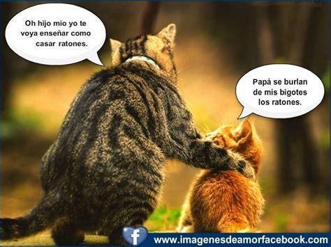 imagenes biblicas graciosas imagenes chistosas de cumpleanos postales para facebook