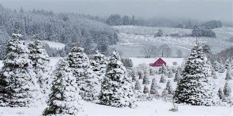 silver mountain christmas tree farm sublimity oregon