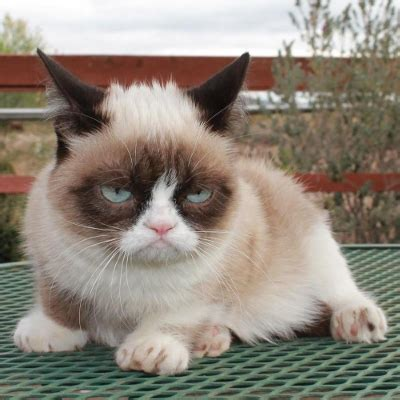 Tard The Grumpy Cat Meme - easy low carb cooking
