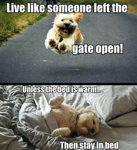 Stay In Bed Meme - hilarious dog memes photos