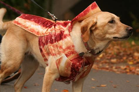 can dogs eat bacon does anyone not like bacon girlsaskguys