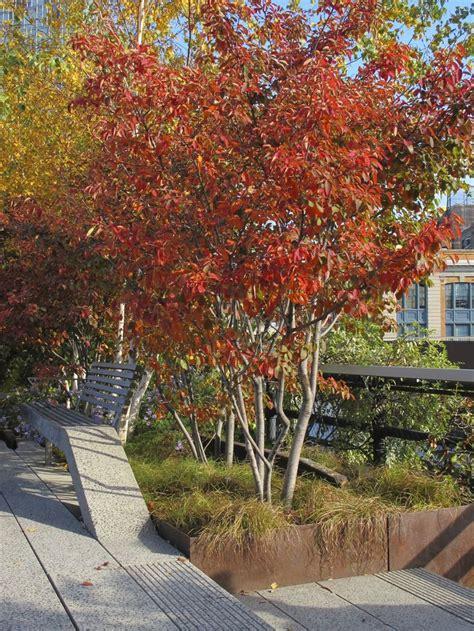 autumn garden 689 best landscape shrubs trees images on