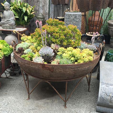 iron kadai bowl  succulents furniture mix furniture