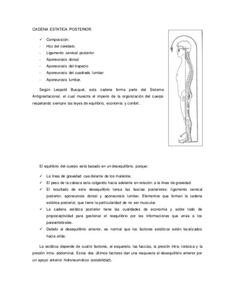 cadenas musculares segun busquet word de cadenas musculares