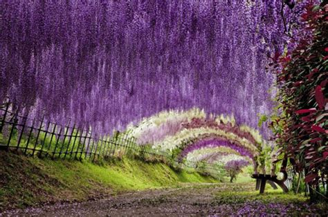 flower tunnel 11 jaw dropping destinations ripped straight from a world
