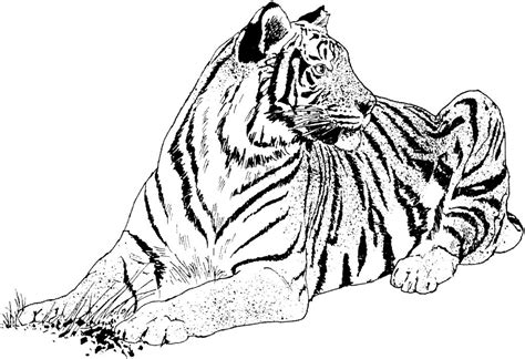 realistic nature coloring pages realistic coloring pages nature animals etc gianfreda net