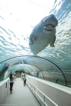 aquarium design sydney 1000 images about amazing aquariums on pinterest