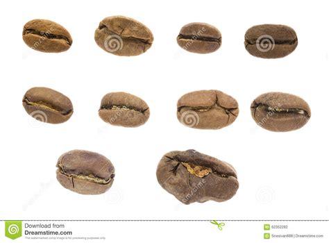 Range Coffee Bean organic medium roasted coffee beans royalty free