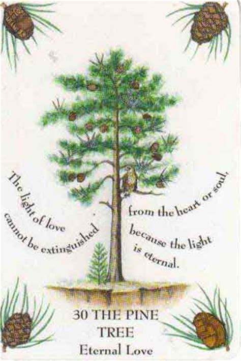 what do trees represent tracey thurman quotes