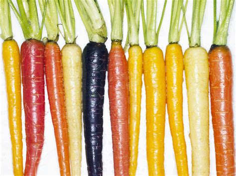 coding for carrots scientists dig up carrot genome cosmos
