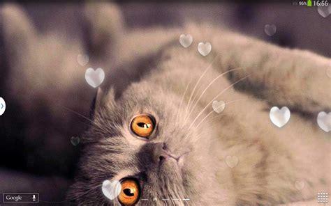 gambar kucing kartun bergerak blacki gambar