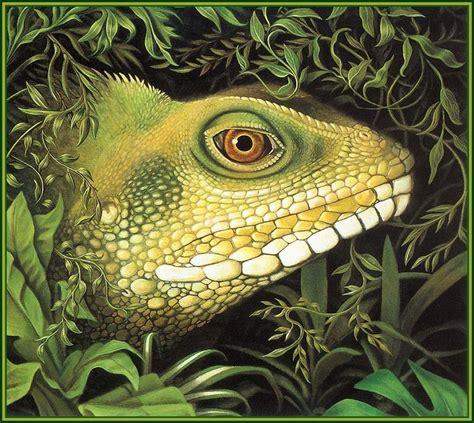 Korean Artwork by Lrs Animals In Art Robert Jew Lizard Head Display Full