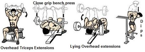 triceps extension bench press full triceps workout exercises fitness workouts exercises