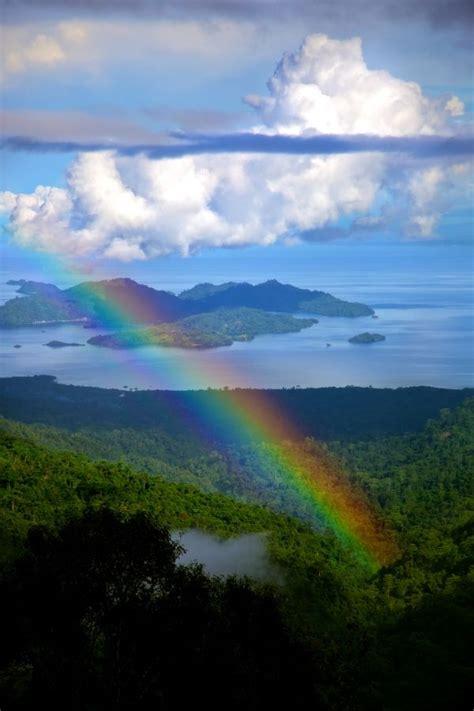 indonesian rain forest images  pinterest