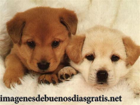 imagenes de perritos tiernos de buenos dias maravillosas imagenes tiernas de perritos imagenes de