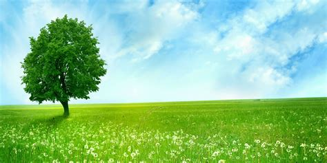 trees background trees forest cover background twitrcovers