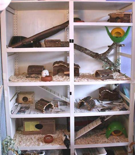 hamsterkäfig 2 etagen ratten info rudelgehege