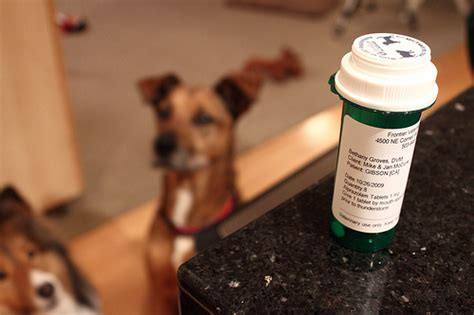 anti anxiety meds for dogs herbal remedies for anxiety prone pooches primal pooch