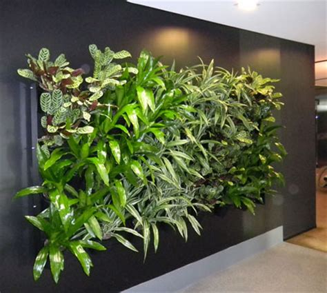 interior plant wall newsletters green design indoor plant hire