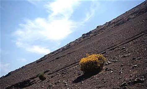la ginestra o il fiore deserto le poesie di mauritius a ginestra o fiore d o deserto