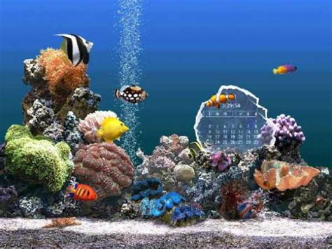 arri鑽e plan de bureau gratuit fond d 233 cran aquarium gratuit