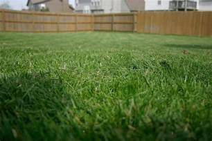 from fescue to st augustine which lawn grass is best for