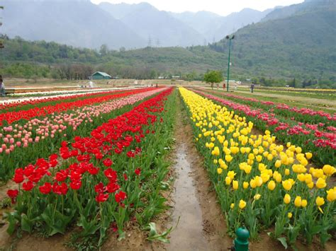 Garden Flowers In India Flower Gardens In India Tulip Garden Festival Ease Your Travel File Botanical Gardens