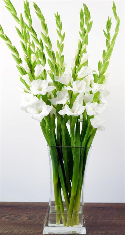 Gladiolen In Der Vase by 20 Wei 223 E Gladiolen