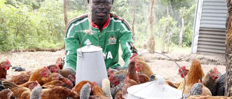 Backyard Chickens Vaccination Vaccines Boost Backyard Poultry Rearing In Western Kenya