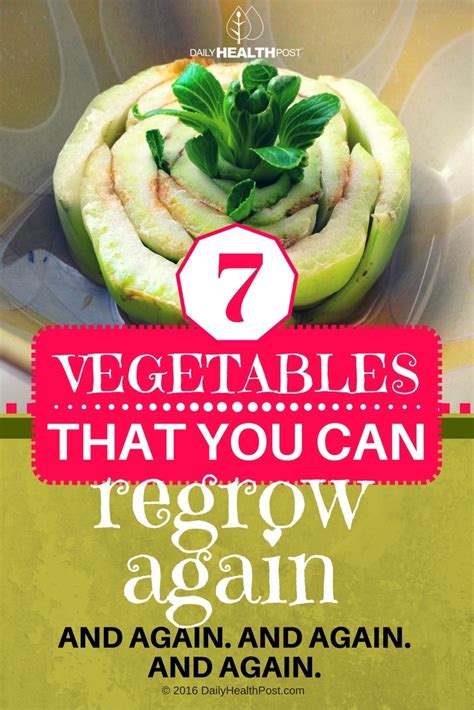 vegetables you can regrow 7 vegetables that you can regrow again and again and