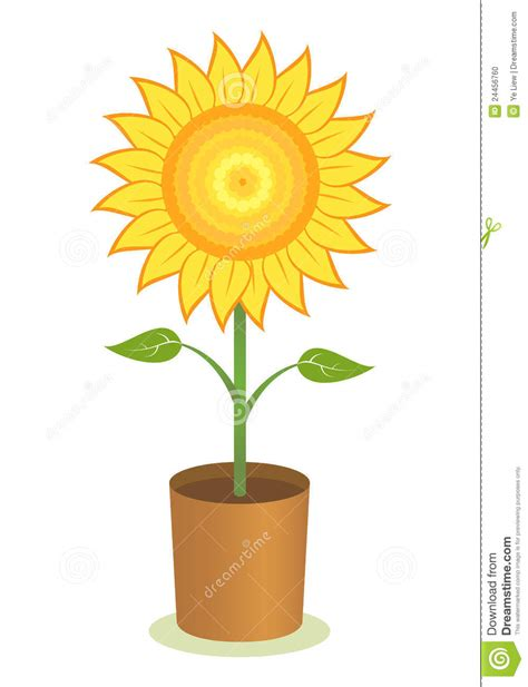 potted sunflower picture more detailed picture about led flower pot gerbera fake flowers sunflower pot stock photo image 24456760