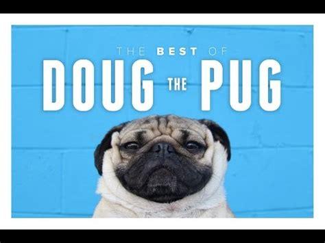tv show compilation doug the pug doug the pug compilation doovi