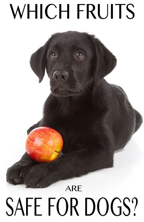 cherries for dogs can dogs eat apples and other fruit the labrador site