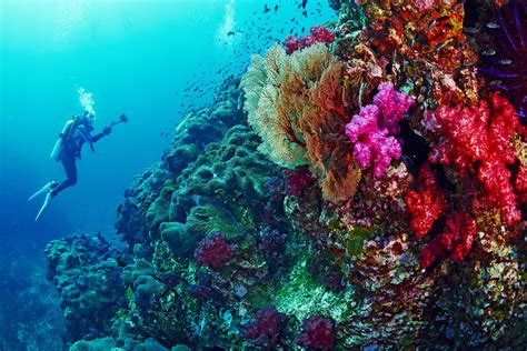 100  [ Best Scuba Diving Road Trips ]   Snuba De Palm