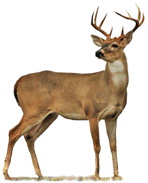 Figureminiaturpajanganbonekapatung Leich Rusa Tailed Doe deer png images free deer png