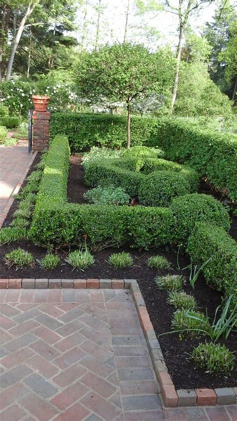 Garden Hedge Ideas Best 20 Garden Hedges Ideas On Hedges
