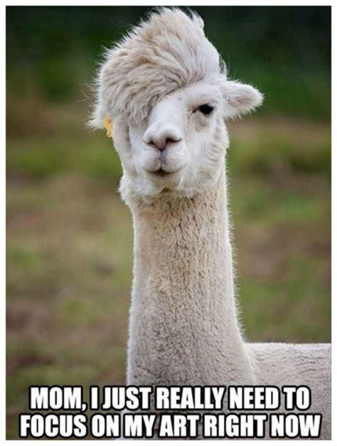 Animals Memes - 20 hilarious animal memes that will make you lol