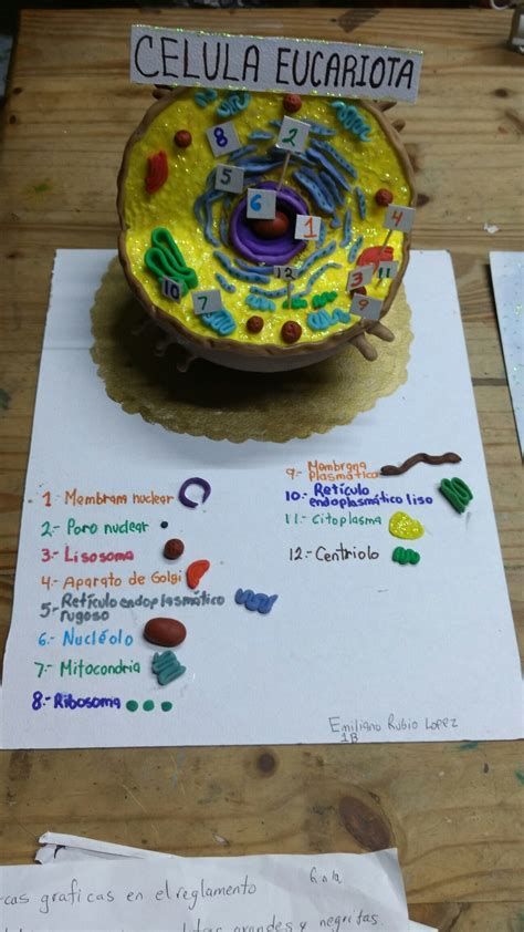 celula animal maqueta escolar youtube c 233 lula eucariota animal bombonideas maquetas