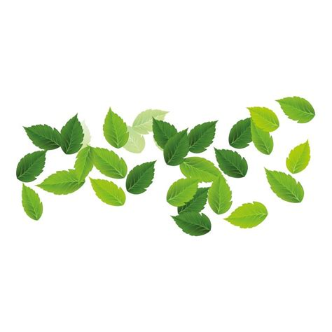 imagenes hojas verdes image gallery hojas verdes