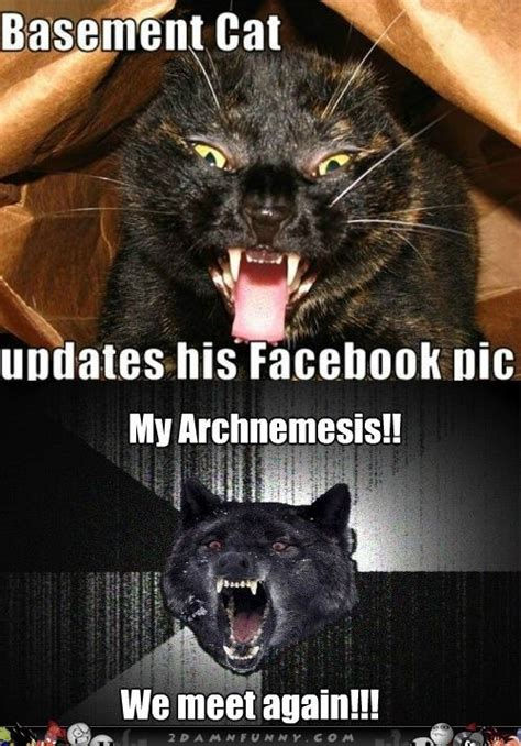 Insanely Funny Memes - 1000 ideas about basement cat on pinterest black cats